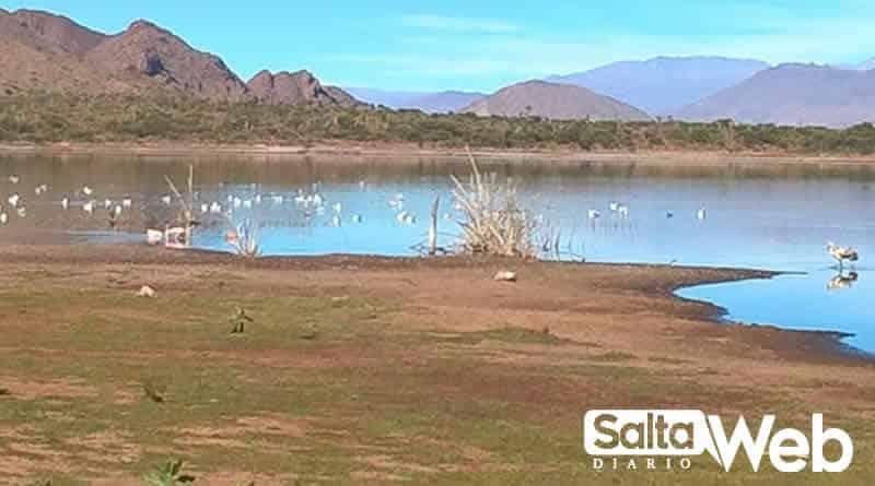 Flamencos en Laguna de Brealito