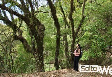 arboles de la selva montana