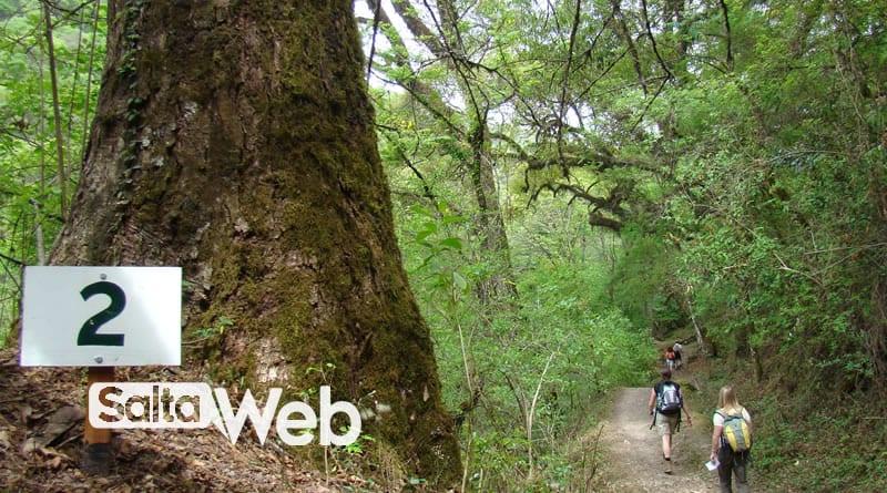 selva montana quebrada san lorenzo