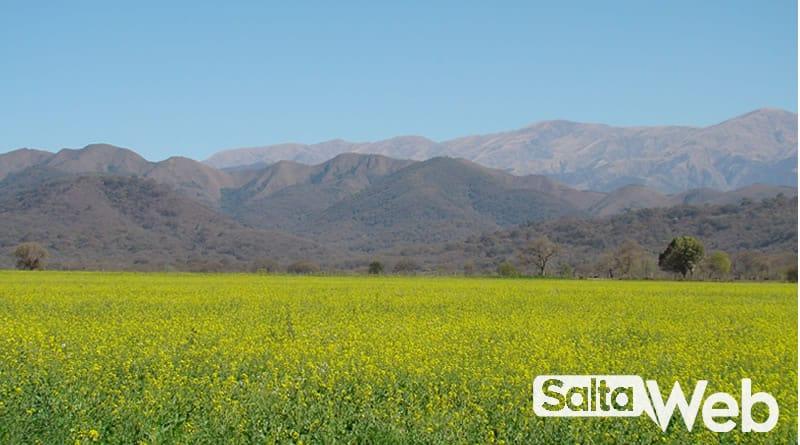 campo del alfalfa