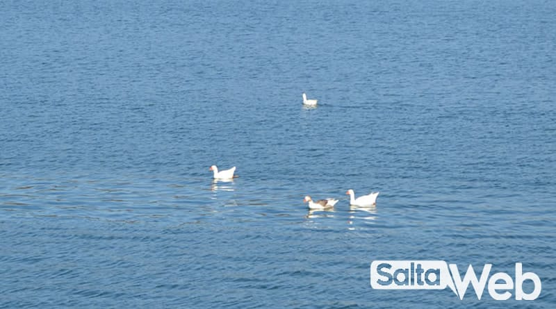 avistaje de aves en dique campo alegre