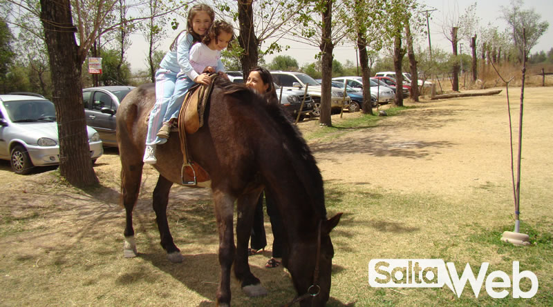 caballos en las estufas campo quijano