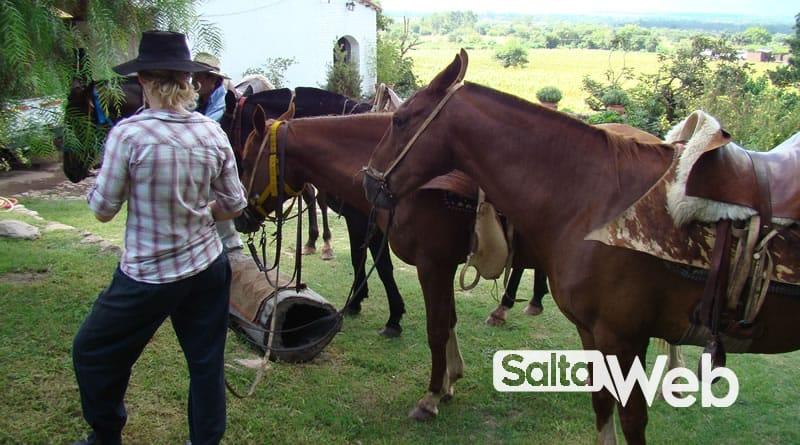 caballos tilian chicoana