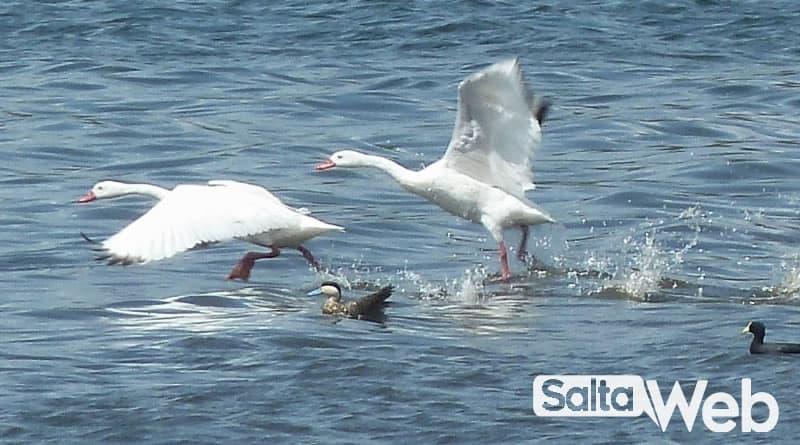 aves en dique campo alegre