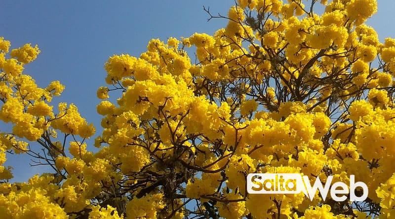 lapachos amarillos salta