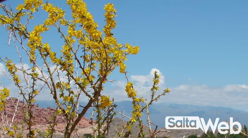 flora de cafayate
